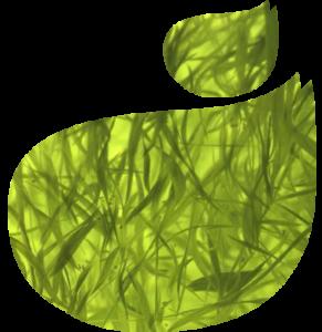 Algues-Klamath-Logo-florence-drean-naturopathe-st-genis-laval