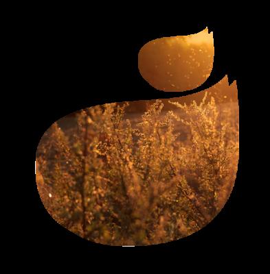 Allergies-et-intolerances-logo-florence-drean-naturopathe-st-genis-laval